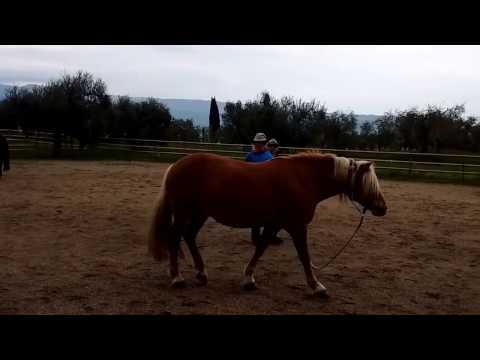 Raidho Healing Horses: Modul 1