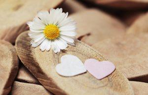 Gänseblümchen mit Herzen