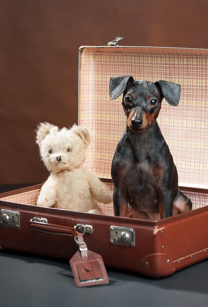 Mit dem Hund im Hotel