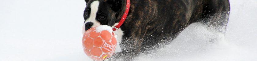 Hund im Winter spielen
