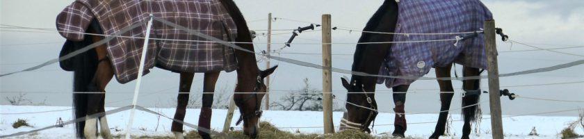 Pferde mit Decke